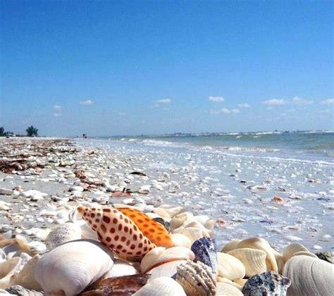best beaches for seashells sanibel island fl the world s best shelling beaches an