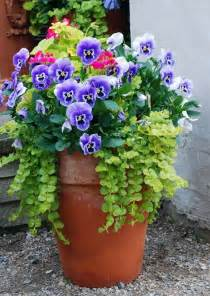 Flowers For Container Gardening Container Planting Pansies Creeping Flowers Gardens Containers