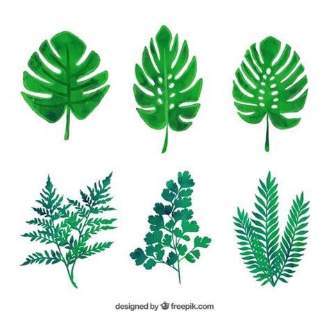 imagenes de hojas verdes solas las 25 mejores ideas sobre hojas en pinterest y m 225 s