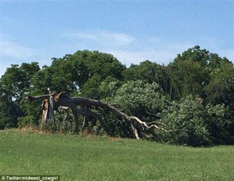 shawshank redemption tree shawshank redemption tree cut down amid liability concerns