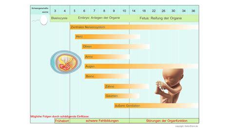 wann erste kindsbewegungen entwicklung eines embryos so w 228 chst dein in deinem bauch