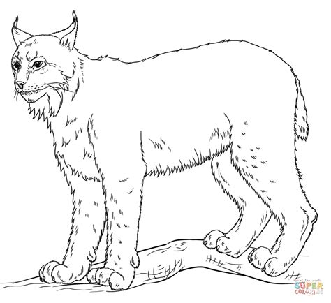 Lynx coloring page   Free Printable Coloring Pages