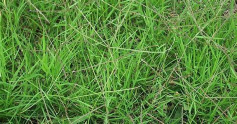 Obat Herbal Bm ilmu budidaya peternakan indonesia obat herbal untuk