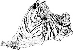 tiger coloring pages big cat coloring pages tigersit