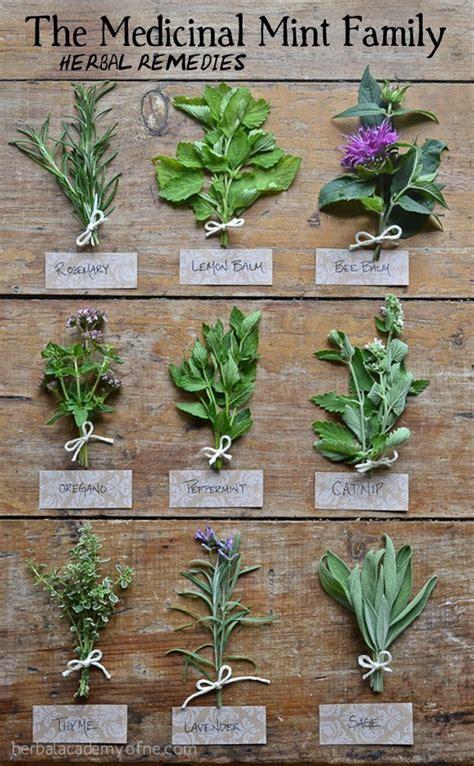 Garden Of My Gummies 25 Best Ideas About Thyme Plant On Ground
