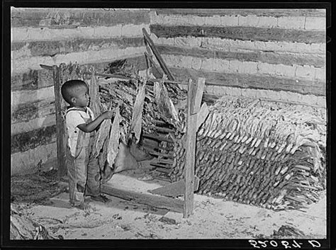 carolina strip house 17 images about sharecroppers on pinterest l wren scott photographs and cotton