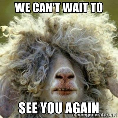 wait     stoner sheep meme generator