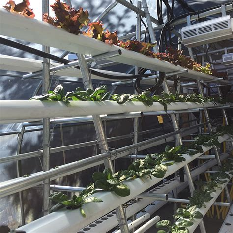 vertical hydroponics part one grozinegrozine