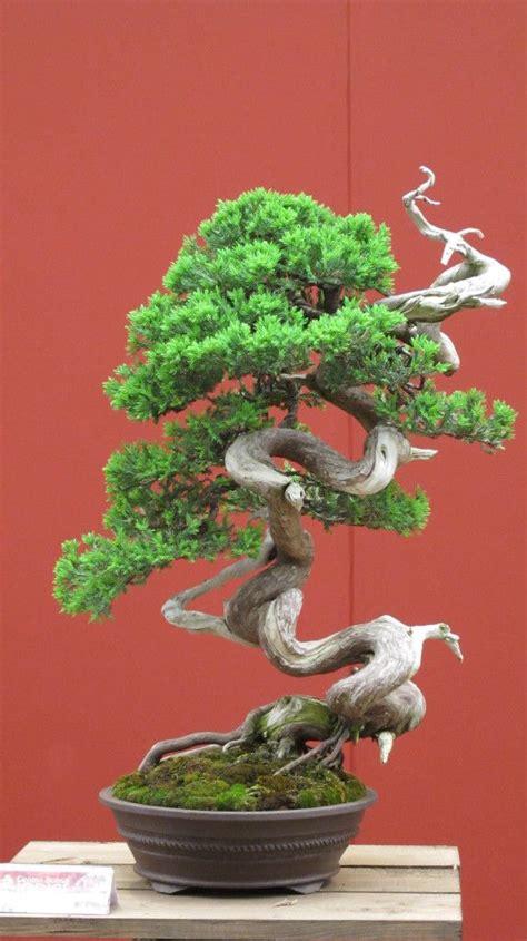 Money Tree Plant Flower - world s most beautiful bonsai trees bonsai pinterest