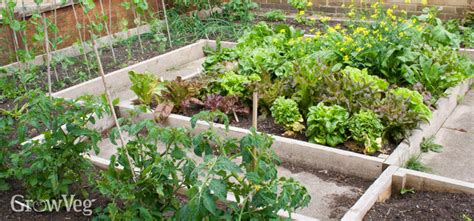 planting systems  vegetable gardens