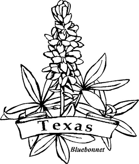 Bluebonnet Flower Coloring Page 50 state flowers coloring pages for