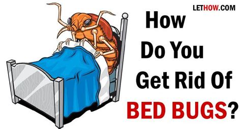 how do you get rid of bed bugs how do you get rid of bed bugs cleanses medicine and cas