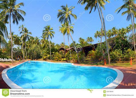 swimming pool  palm trees  tropical resort stock