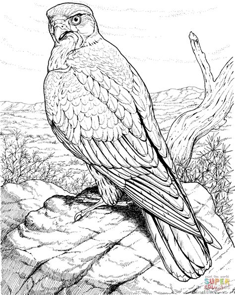 Image Gallery Hawk Coloring Pages Tailed Hawk Coloring Page