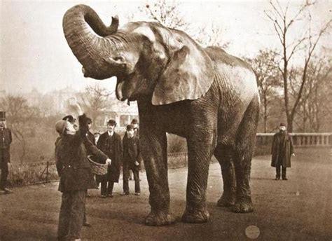 Hamida Jumbo a tufts exhibit celebrates storied elephant mascot jumbo