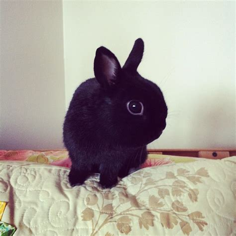 Www Bunny | george bunny net worth height weight age bio