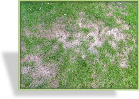 Ameisennester Im Rasen Entfernen 3543 by Ameisennester Im Rasen Hausmittel Gegen Ameisen Im Garten