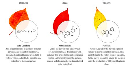 how do leaves change color why do leaves change colors siowfa16 science in our
