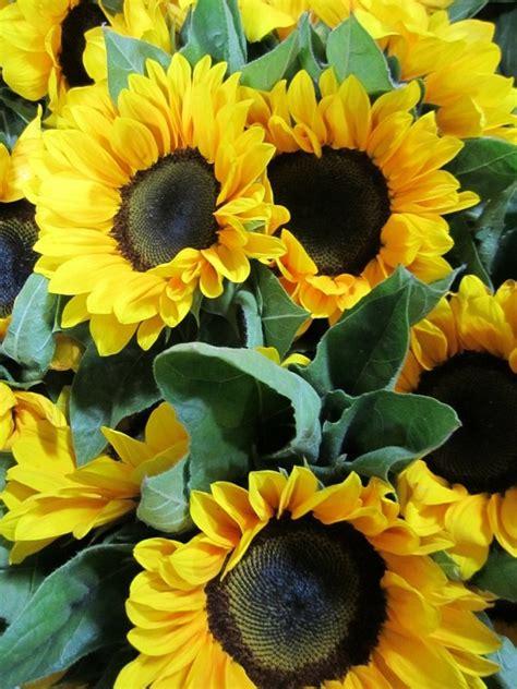 fiori da piantare in giardino 10 stupendi fiori da piantare in primavera guida giardino
