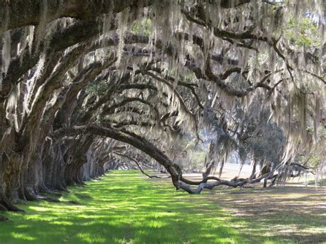 Plantation Style inside beaufort one of south carolina s most charming