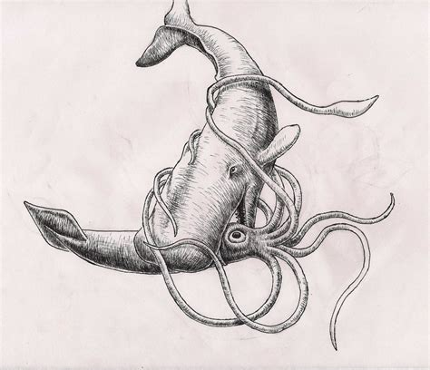 whale vs squid sketch by rhyshaug on deviantart