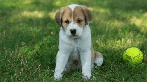 happy puppy gif puppy gifs find on giphy