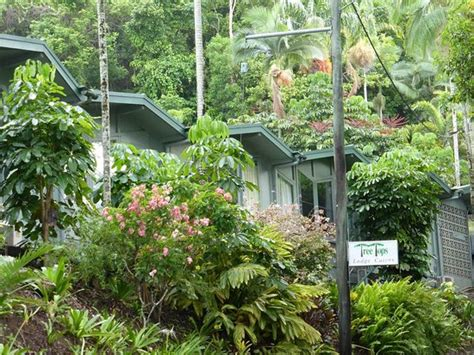 Tree Top Cabins Qld by Tree Tops Lodge Cairns Updated 2017 Specialty Inn