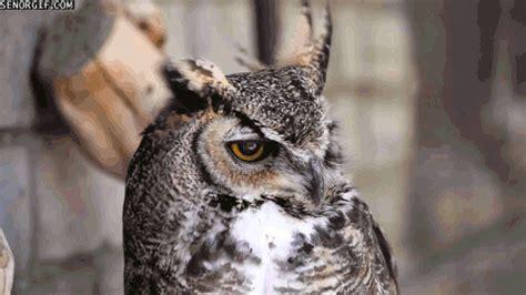 Animal Mug Urban Dictionary Owl