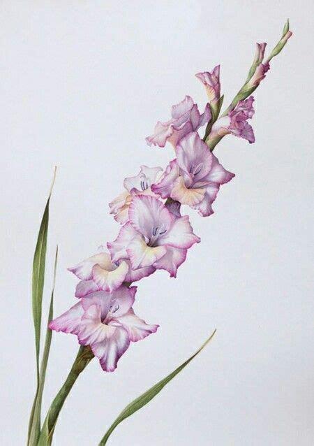 21 best gladiolus tattoo hip 51 best flowers drawing of gladioli images on