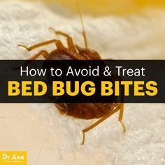 How To Cure Bed Bug Bites by 25 Unique Bed Bugs Bites Ideas On Bed Bug