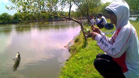 Bibit Ikan Nila Di Sidoarjo mancing ikan nila dan kakap kiloan disedati sidoarjo