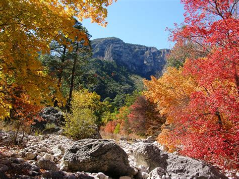 fall colors in fall colors report guadalupe mountains national park u
