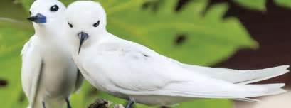 native or not hawaiian birds aren t always what they seem