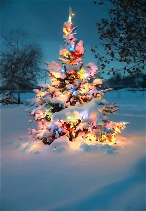 snow covered christmas tree with colorful lights flickr