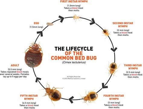insetti materasso cimici letto bioallergen
