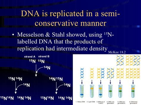 semiconservative replication involves a template what is