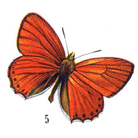 Fairy Home Decor free vintage clip art orange butterflies for halloween