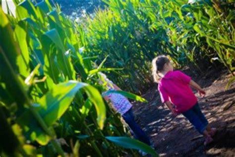 botanical gardens corn maze denver botanic gardens corn maze at chatfield but i want