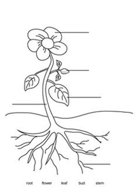 tree diagram coloring page label the parts of a plant outdoor worksheets