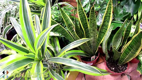house plants indoor  home depot youtube