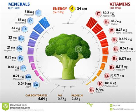 healthy fats nutrition facts myths about broccoli nutrition facts nutrition