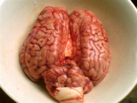 cara membuat otak otak sapi resep gulai otak sapi ala dentist chef dentist chef