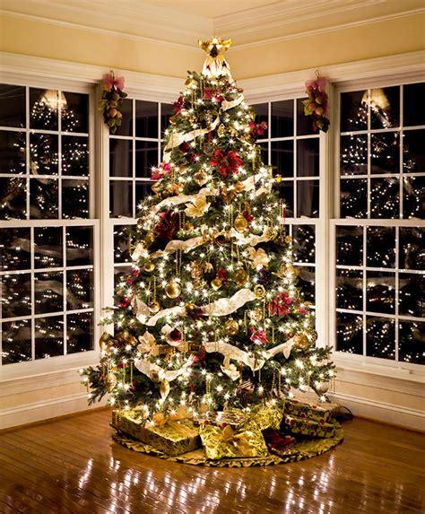 december photo challenge christmas tree
