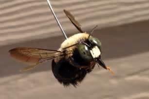 carpenter bee killer spray bait trap products do my