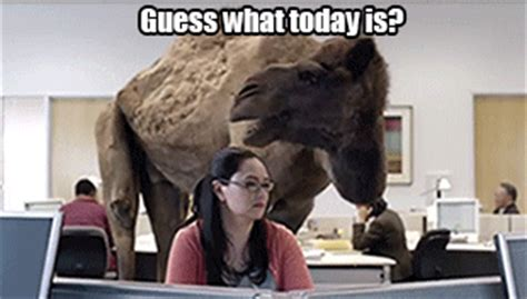 geico camel commercial hump day hump day thick panda supreme irene the dream ghetto