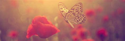 imagenes flores y frases im 193 genes de flores 174 fotos de rosas con frases de amor
