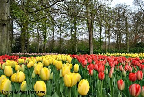 giardini olandesi riapre il keukenhof il parco dei tulipani in olanda