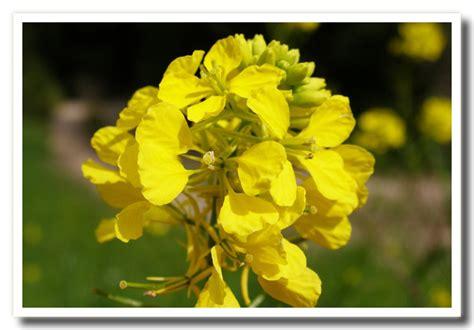 nomi fiori di co nomi di fiori nomi di fiori flowers free large
