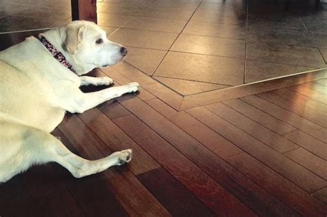 The House Counselor Answers: How Do You Protect Hardwood