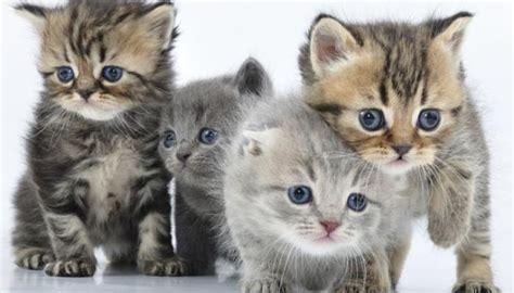 imagenes egipcias de gatos estas son las 8 enfermedades que transmiten los gatos
